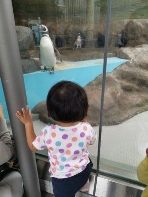 しながわ水族館のペンギン