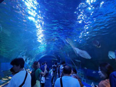 しながわ水族館のトンネル展示