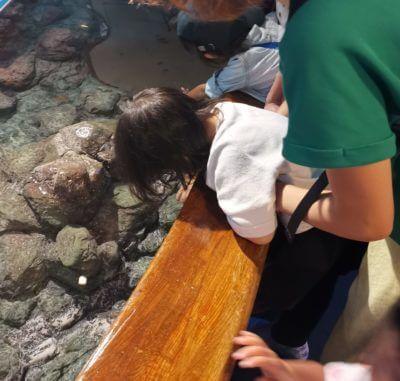しながわ水族館のふれあいエリア